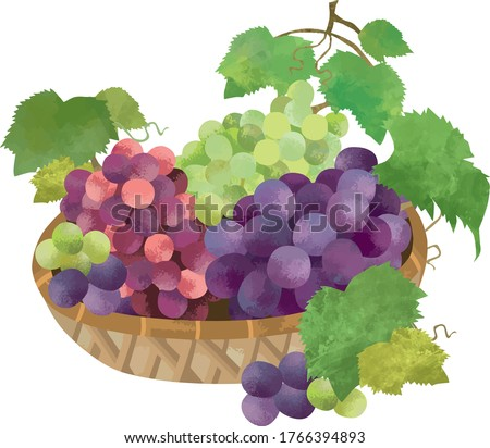 illustration of a grape in a