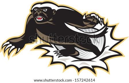 illustration of a honey badger