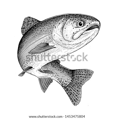 Illustration of a leaping Rainbow Trout Stock photo ©