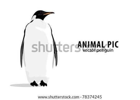 Illustration of a pinguin on white background Stockfoto ©