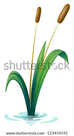 illustration of a plant on a