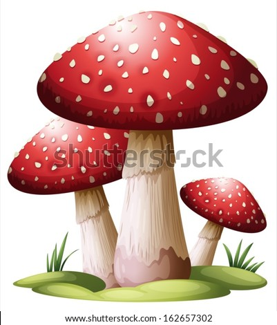 Illustration of a red mushroom on a white background