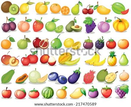 illustration of a set of fruit