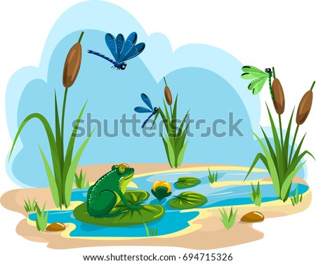 illustration of a summer pond