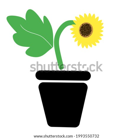 illustration of a sunflower plant in a pot