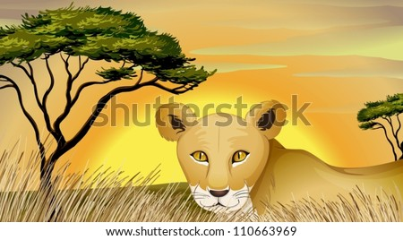 illustration of a tiger and