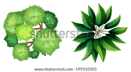 Illustration Of A Top View Plants On White Background