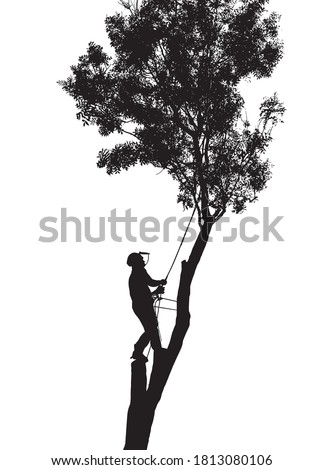 Illustration of a Tree Surgeon or Arborist roped up a tall tree Stock photo ©