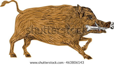 illustration of a wild pig boar