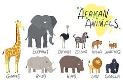 Illustration of African animals