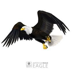 Illustration of american bald eagle, isolated