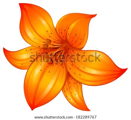 illustration of an orange lily