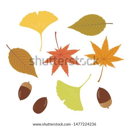 Illustration of autumn leaves, ginkgo leaves, acorns