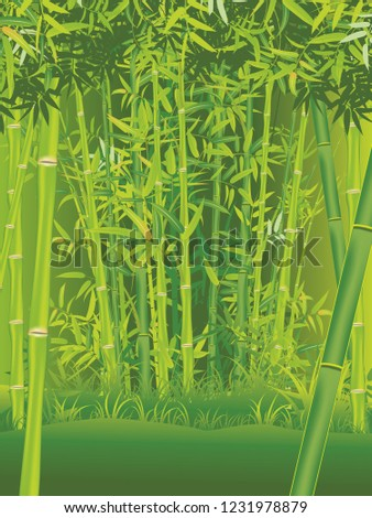 illustration of bamboo trees