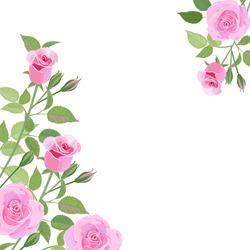 Illustration of beautiful pink roses.