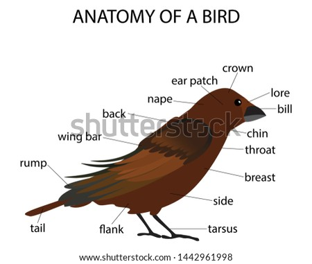 illustration of biology, Anatomy of a bird, the physiological structure of birds' bodies,