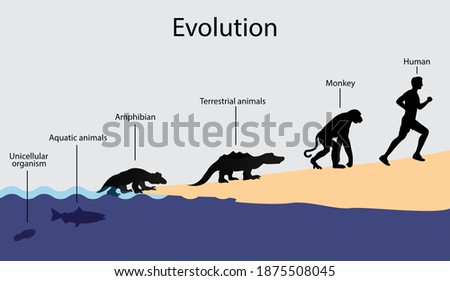 Illustration of biology and physics, The evolution of organisms, Development from a single celled organism to a human being, Birth of life ストックフォト ©