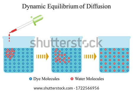 Illustration of biology. Dynamic equilibrium is a diffusion that changes the concentration of highly concentrated substances to low concentration substances until the density in all areas is balanced.