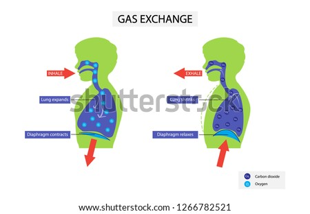 illustration of biology  gas