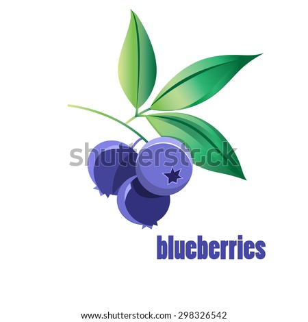 illustration of blueberries on a white background
