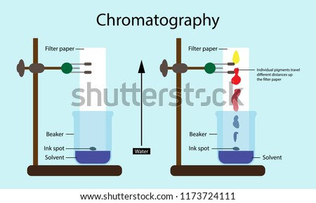 illustration of chemistry, Chromatography, technique for separating the components, or solutes, of a mixture on the basis of the relative amounts of solute distributed between a moving fluid stream