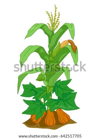 illustration of corn  pumpkin