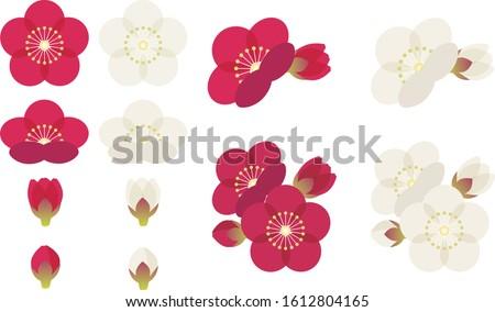 Illustration of cute plum blossom Stock photo ©
