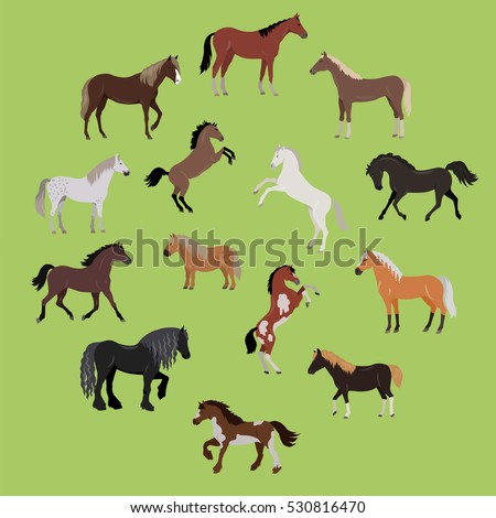 Illustration of different breeds of horses. Various color horses. Horse icon set. Set of horses in action: stand, run, jump, go. Horseback riding. Isolated vector illustration on green background.