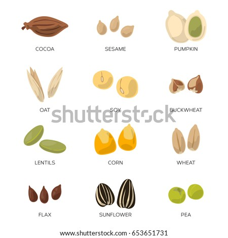 Illustration of different seeds isolate on white background. Vector icons set