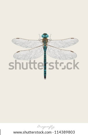 illustration of dragonfly