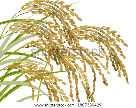illustration of ears of rice