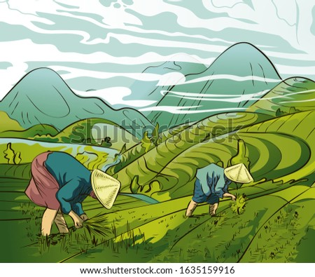 Illustration of farmers planting rice in the fields, rice field terraces in the mountains landscape, Vector rice or tea plantation on a cascading field on a mountain in China, Vietnam or the Philippin