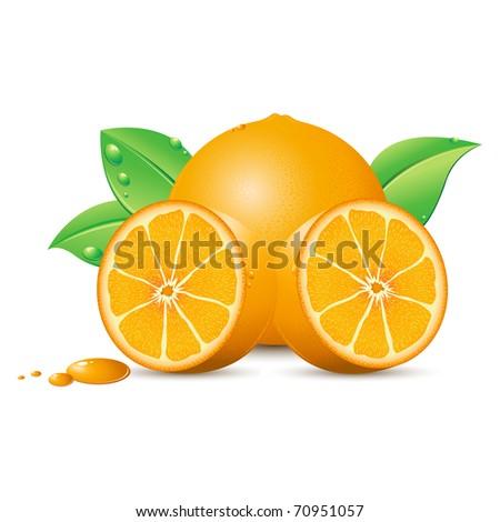 illustration of fresh oranges kept on white background