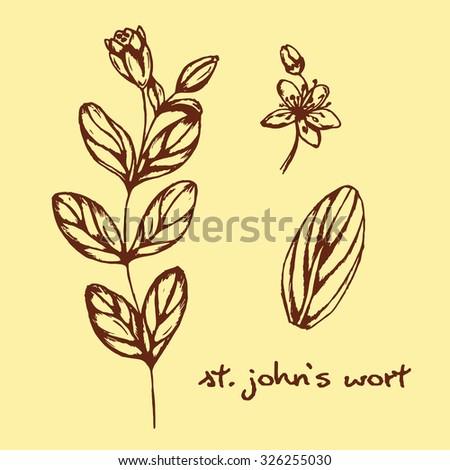 illustration of healing herbs