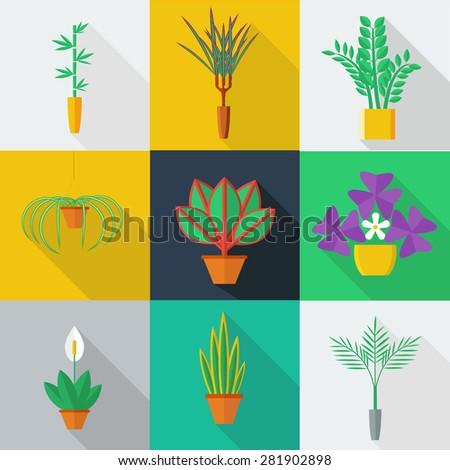 illustration of houseplants