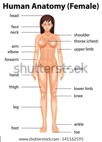 Illustration of human body Human Body Parts Name
