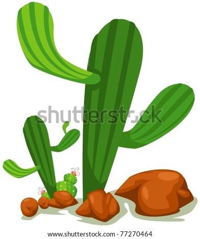 illustration of isolated cactus on white background