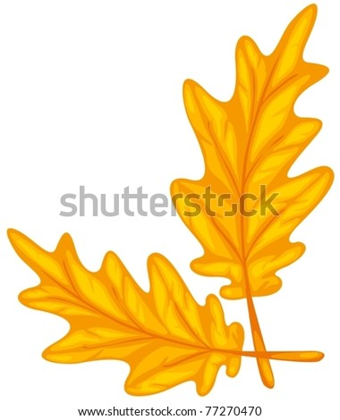 illustration of isolated colorful leaf on white background