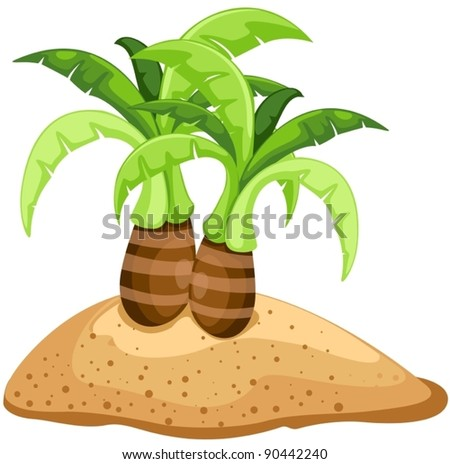 illustration of isolated palm