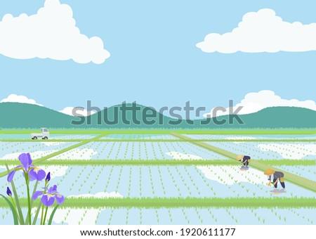 illustration of japanese rice