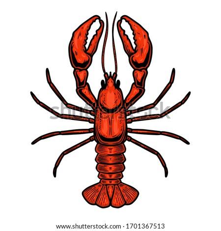 Illustration of lobster in engraving style. Design element for logo, label, emblem, sign, badge. Vector illustration ストックフォト ©