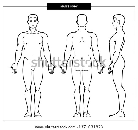 Illustration of men's body and male anatomy. Front, back and side view. Outline Vector Illustration - Vector