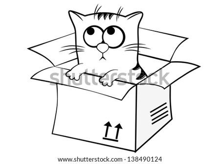 A Cat In The Box