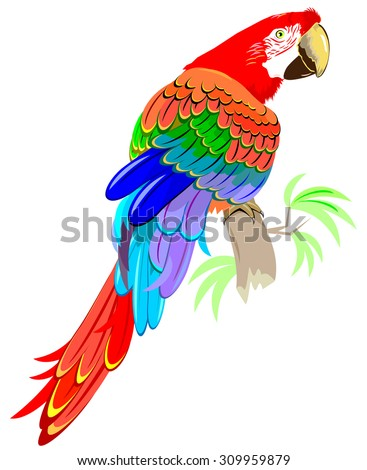 illustration of parrot siting