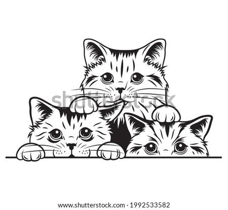 illustration of peeking cats