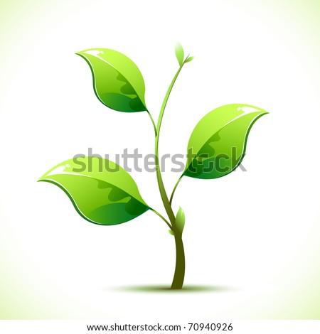 illustration of plant sapling