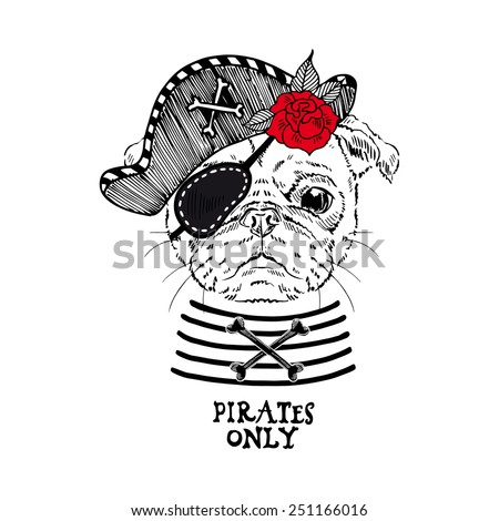 illustration of pug pirate