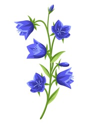 Illustration of realistic bells. Beautiful summer flower.