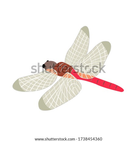 illustration of red dragonfly