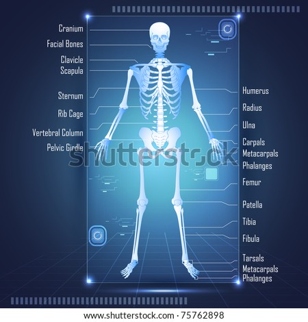 illustration of scanning of human anatomy showing skelton with labels of all bones stock photo